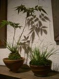 植木鉢の植物がたくさん