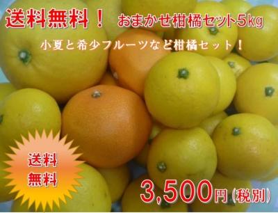 小夏柑橘セット