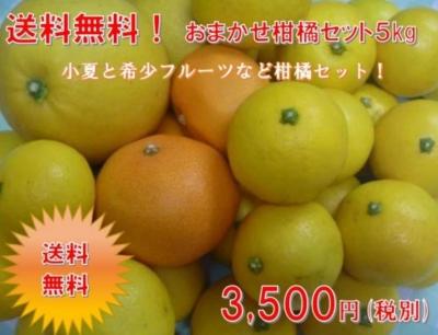 お任せ柑橘セット