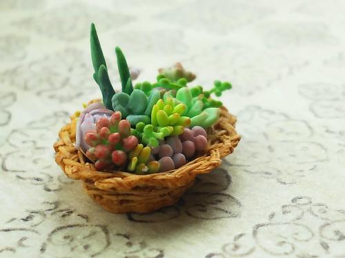 ミニチュア多肉植物