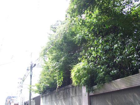 人の庭の植物
