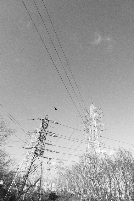 カラス鉄塔