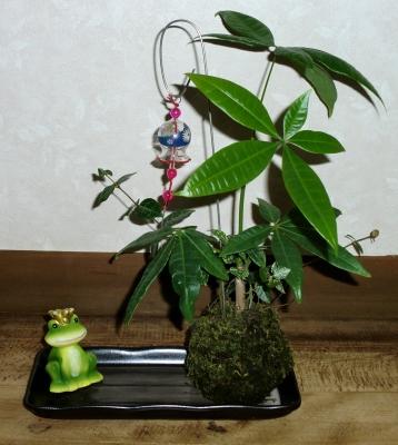 観葉植物を使って見た目も涼しげなこけ玉アレンジメントを作りました