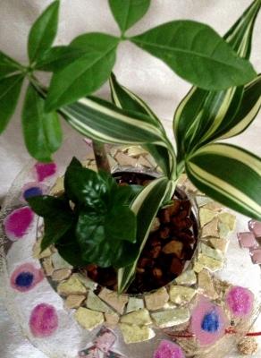 観葉植物のハイドロカルチャー&モスアニマル
