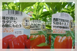 万田アミノアルファプラスで育てる赤とオレンジピーマン