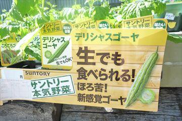 万田肥料で育てたキューリ