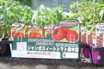 植物用万田酵素を与えて育てたトマト