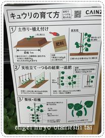 万田アミノアルファプラスを使ったきゅうり栽培