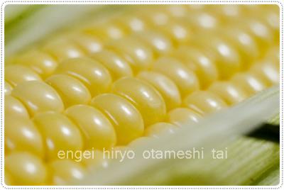 万田酵素肥料でトウモロコシを育てる