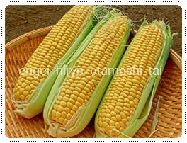 収穫してすぐに食べよう!