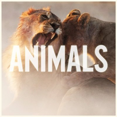 Maroon 5 - Animals の洋楽歌詞和訳・カタカナ情報まとめ
