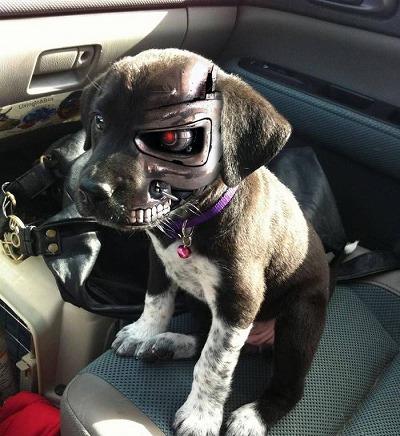 83fa6f39aafe0f4886503f4c11f1be16--dog-humor-funny-humor.jpg