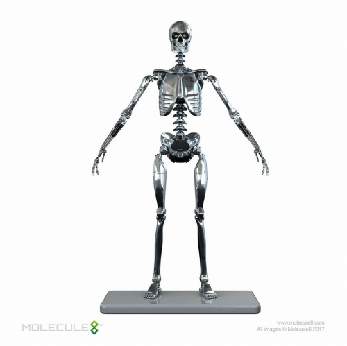 Endoskeleton (蜀・鬪ィ譬シ)-3-w60.jpg