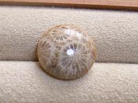 ペトリファイド・コーラル/珊瑚(サンゴ)メノー