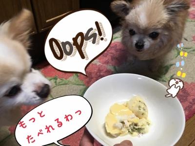 ドッグ☆小田巻蒸し試食