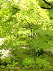 kyoto 29