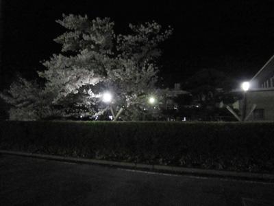 小川高夜.jpg