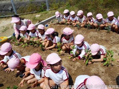 2017-0511 夏野菜の苗植え