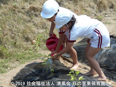 2019/05/24 野菜の苗植え