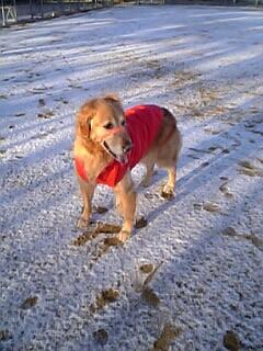 デイジー雪景色