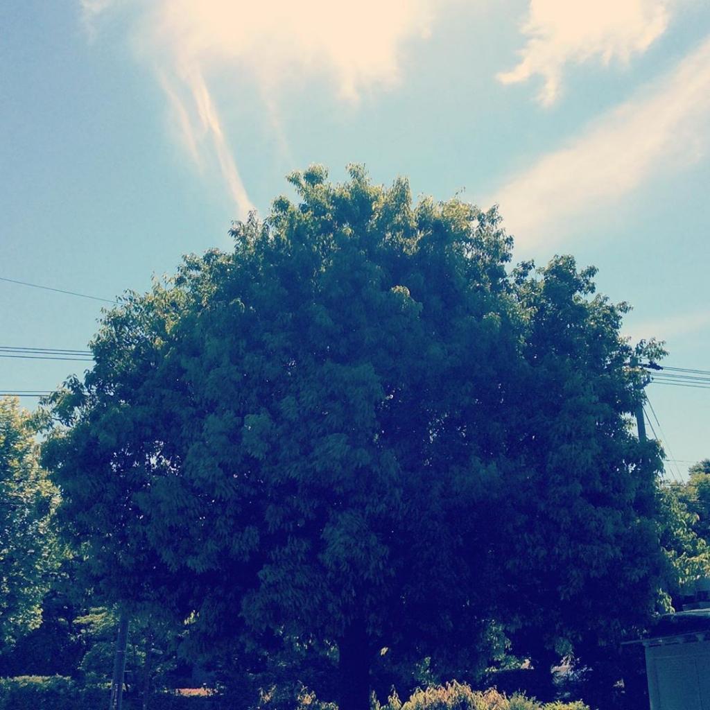 木と曇り空
