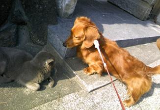 犬と猫 友情