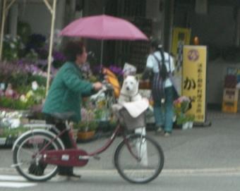 自転車犬2