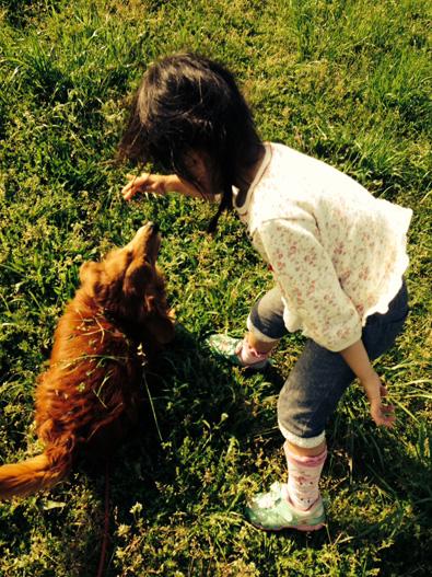 河内 広場 公園 犬 ドッグ