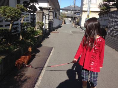 犬と散歩 画像 ダックス