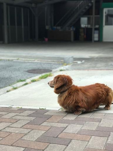 iphone 7plus ポートレート   犬 撮影