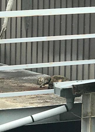 野良猫の昼寝 岩合さん
