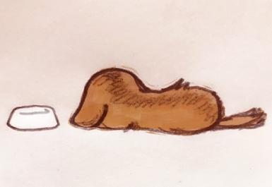 眠る ダックス 梅雨 犬