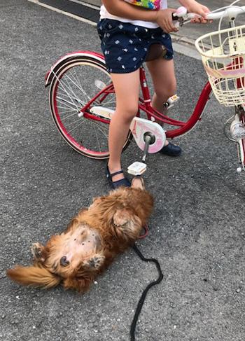 自転車大好き犬