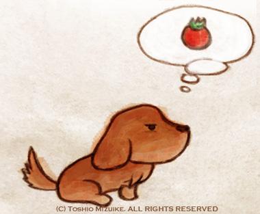 tomato  トマト犬