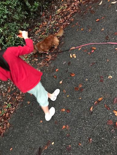 秋 こどもと犬