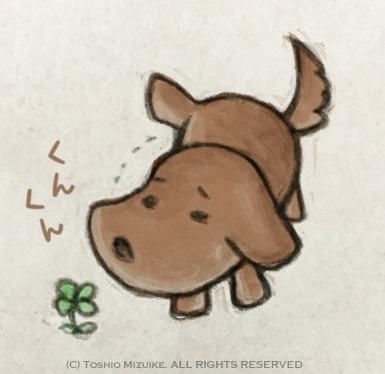 犬のおしっこ 散歩 尿犬