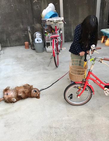 空気入れ 自転車