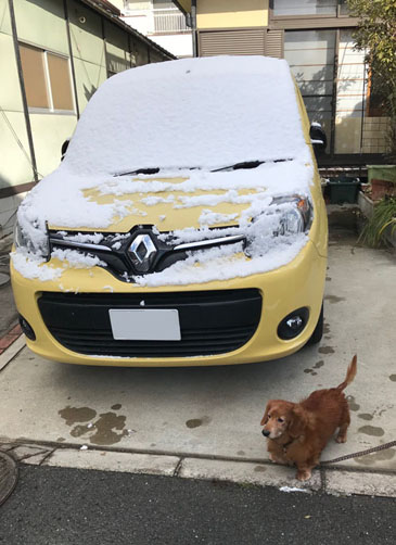 カングー 雪 積雪
