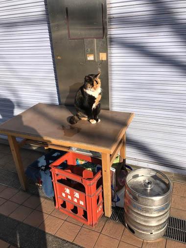 新木場駅 猫 ねこ ネコ