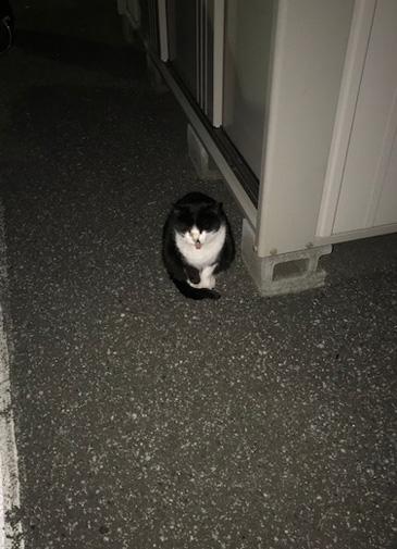 新木場駅 猫 野良猫 ねこ ネコ