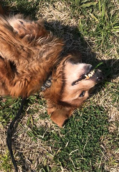 歯に葉が詰まる犬