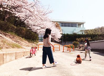 桜満開 大阪 2018年 2019