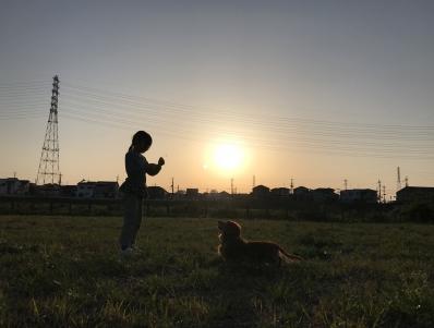 夕焼け 女の子と犬