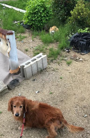 犬と猫 いぬとねこ