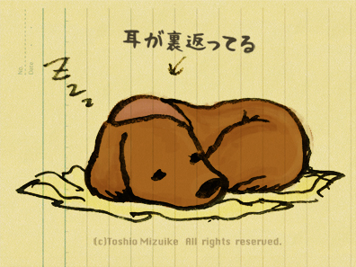 寝る 眠る犬 ダックス 寝転ぶ
