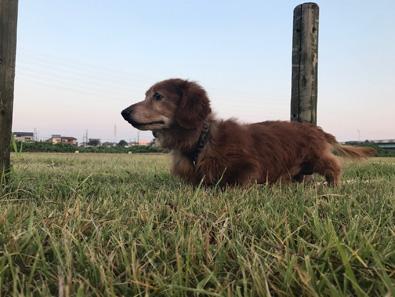 真夏 朝散歩 猛暑 犬