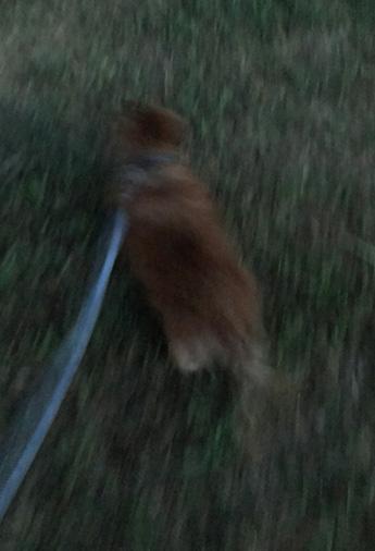 夏 早朝 散歩 犬