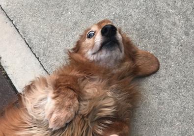謎犬 ダックス