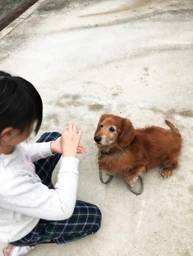老犬 躾け中 お手