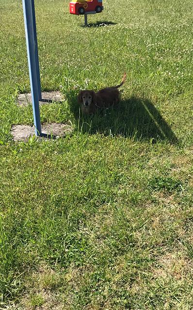 日陰 涼しい 犬